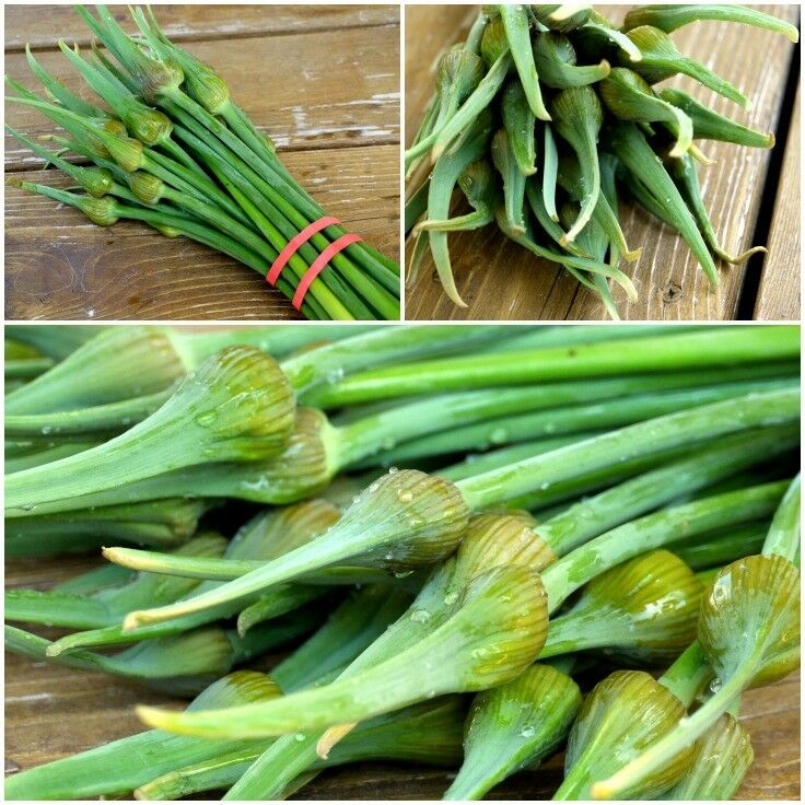 Raw Garlic Spears (or Garlic Scapes) Recipe | The Good Hearted Woman
