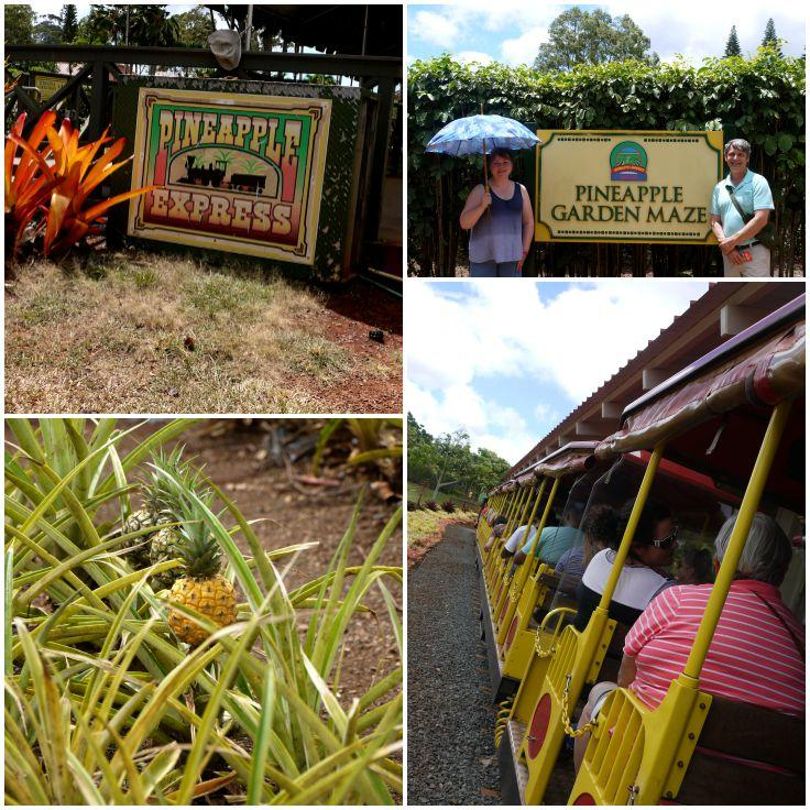 The Dole Plantation: The Complete Pineapple Experience | The Good Hearted Woman