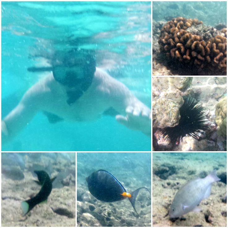 Helpful Tips for Snorkeling Beginners, plus a brief recap of our adventure in Hanauma Bay, Oahu. | The Good Hearted Woman