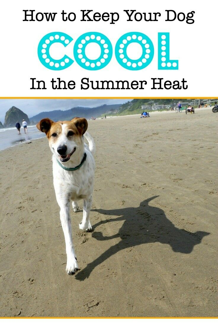 Keep your dog cool in the summer heat! With just a few easy steps, you help keep your pup as comfortable and insure her safety at the same time. | The Good Hearted Woman #pets #petsafety #summer