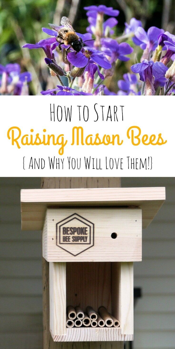 Are You a Backyard Gardener? Have you heard about Mason Bees? These little non-stinging, super-pollinating bees are one of the best kept secrets of the gardening world! Exceptionally easy to raise, Mason Bees are ultra-gentle uber-pollinators that will improve the health and well-being of your flowers, fruit crops, and garden.| The Good Hearted Woman