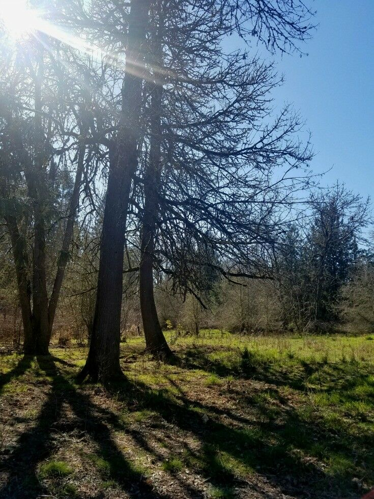 Rock Creek Trail - Orenco Woods Nature Park {Hillsboro, Oregon} | The Good Hearted Woman