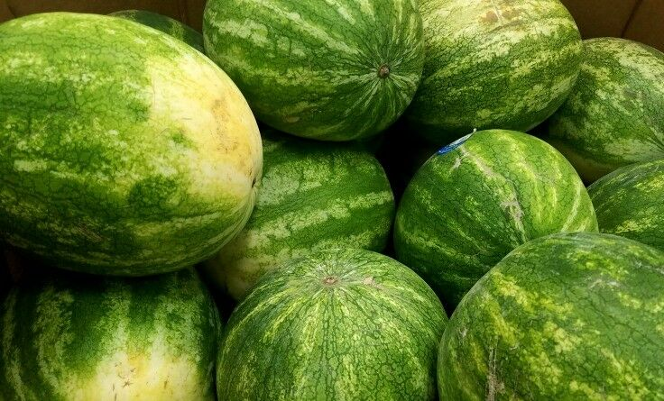 How to Pick a Perfect Watermelon, plus 101 Amazing Watermelon Ideas | The Good Hearted Woman